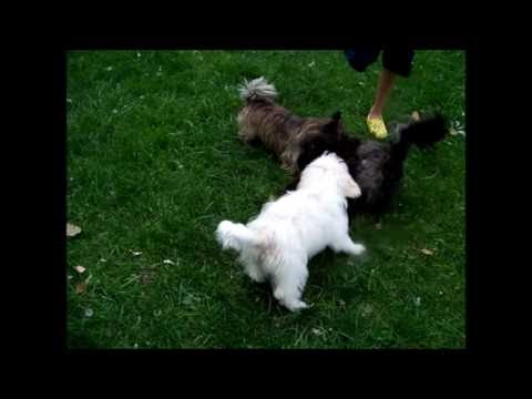 Cuteness overload - Three dogs wrestling #dogs