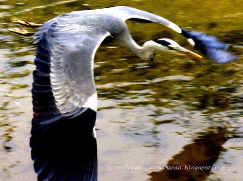Garça16052016blog.jpg