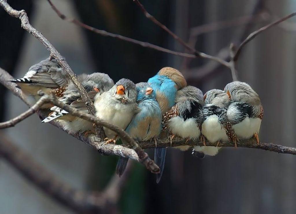 20 fotos de pássaros abraçadinhos que também aqueceram seu coração 11