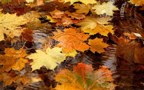 autumn desktop wallpaper backgrounds wallpaper cave