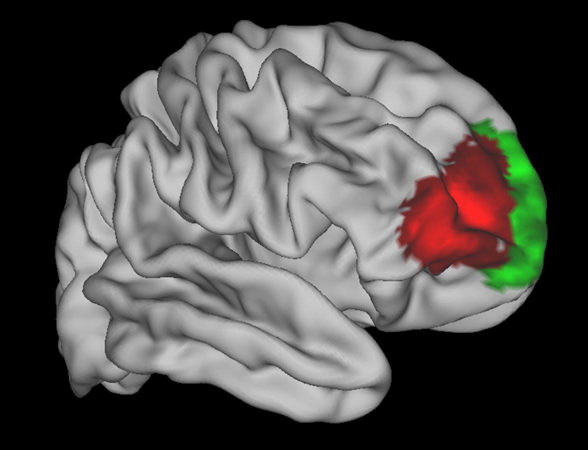 human brain region