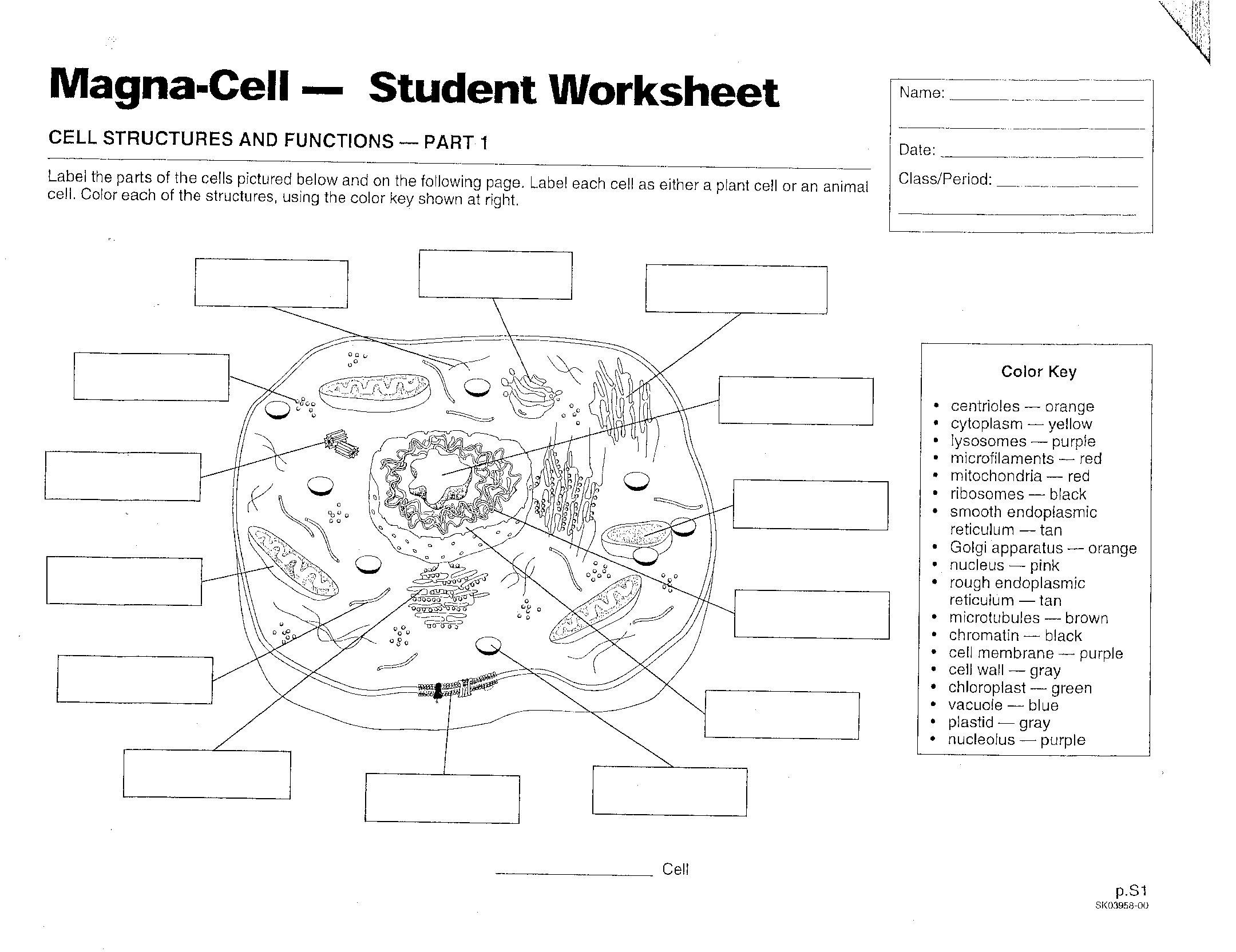 35 Animal And Plant Cells Worksheet Key Worksheet Resource Plans