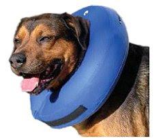 Cão com colar
