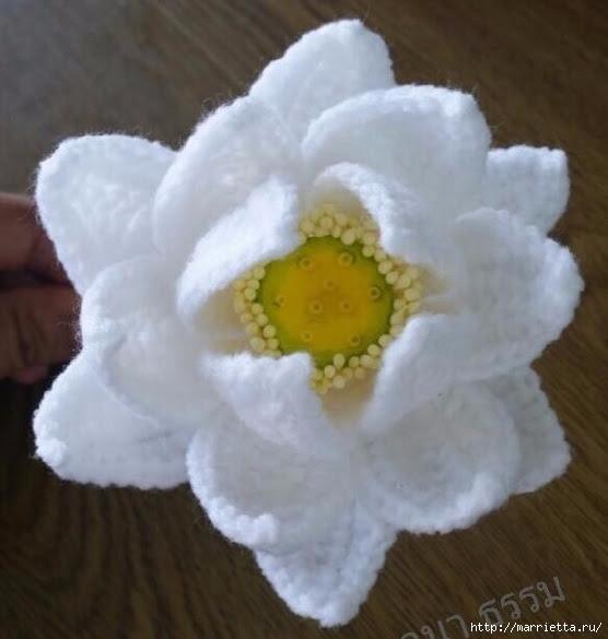 Цветы крючком. Белая кувшинкаЦветы крючком. Белая кувшинка (9) (556x585, 137Kb)