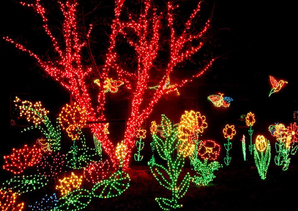 christmas lights zoo columbia sc christmas ideas