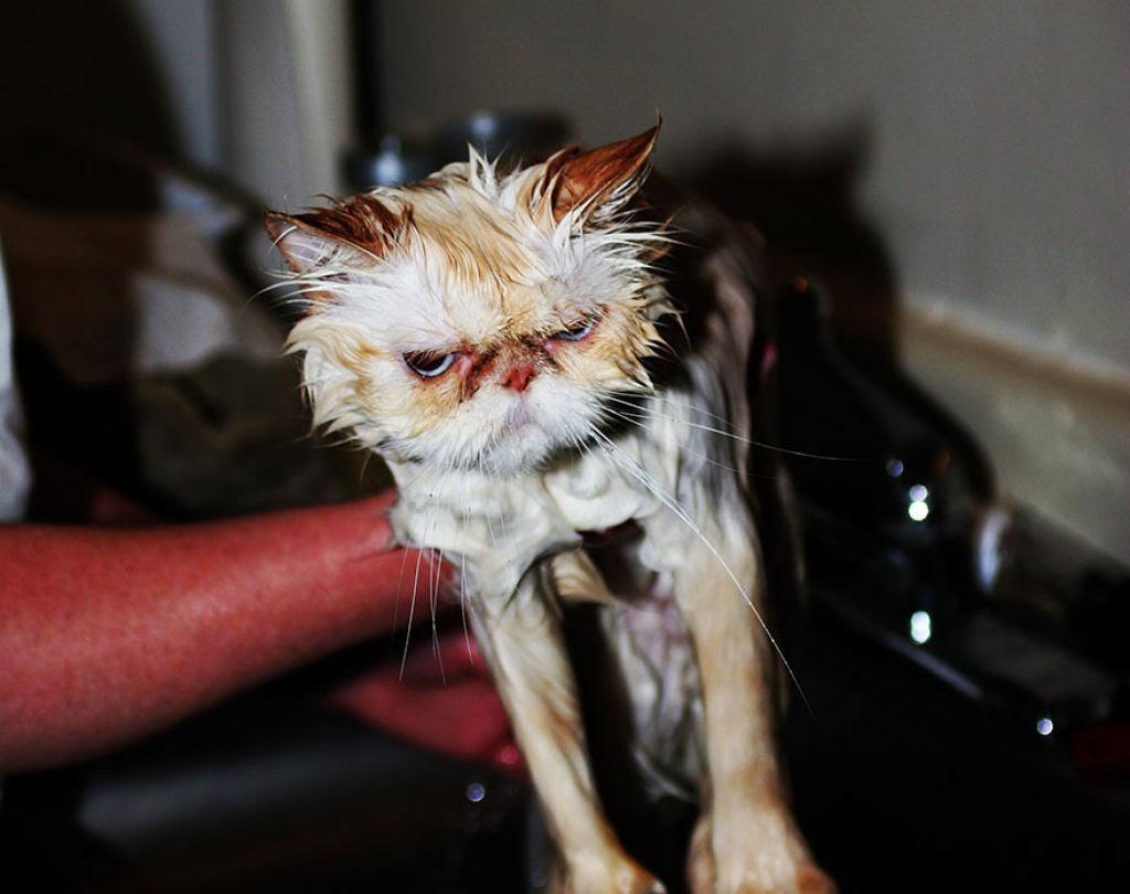 Fotografias engraçadas de gatos tomando banho 20