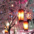 blossom and lanterns | Favorite Places and Spaces | Pinterest
