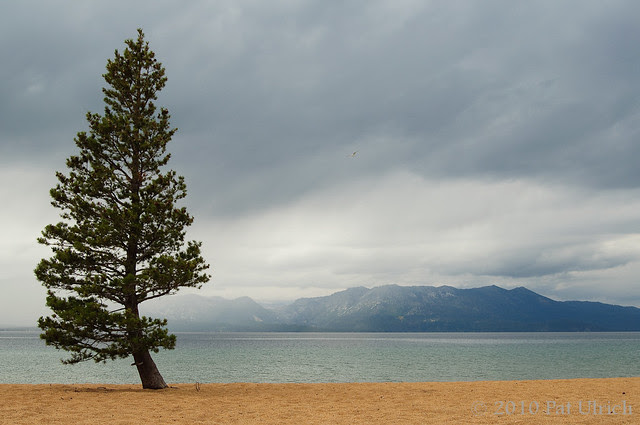 Merry Christmas and Happy New Year! Lake Tahoe -- Pat Ulrich Wildlife and Nature Photography