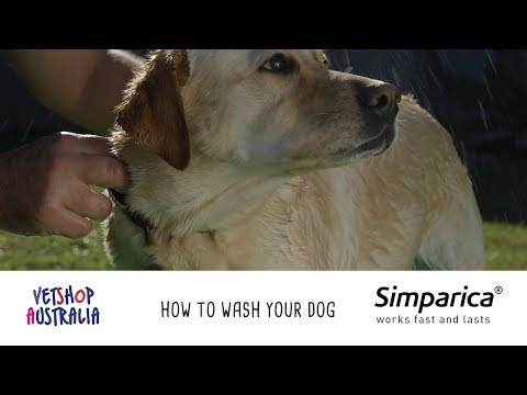 How to Wash Your Dog
