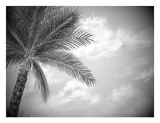 Black And White Palm by Darren Cannell