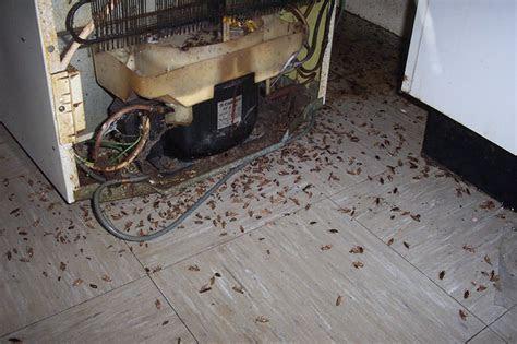 Cockroach Facts   Cockroach Killer   Cockroach Control