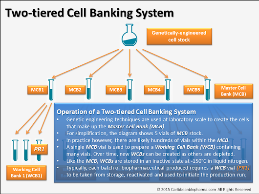 The Process is the Product – The Master Cell Bank 2
