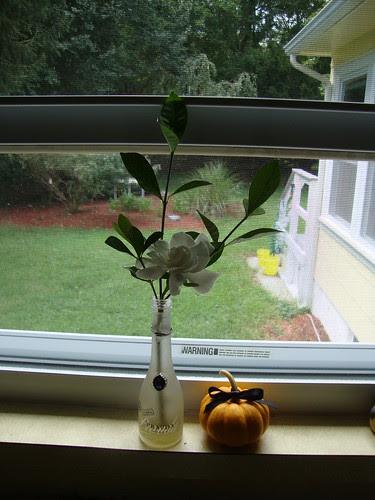 pumpkin C in mom's kitchen window