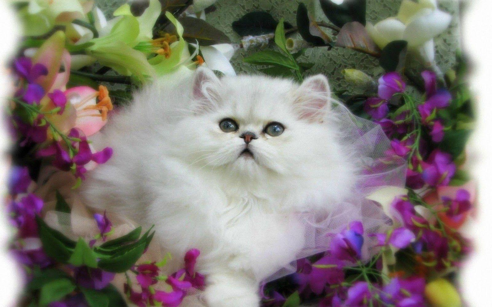 Download Kumpulan Wallpaper Bergerak Kucing HD Paling Baru