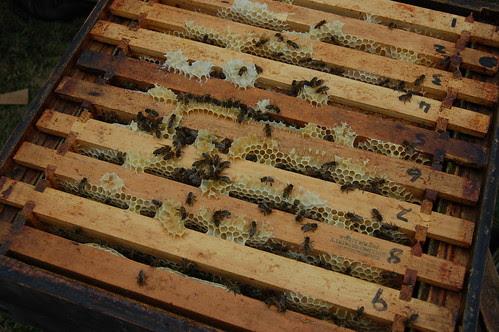 Beekeeping Jul 10 3