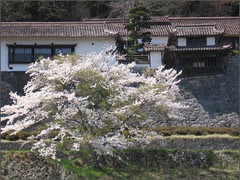 080 cherry tree and residence