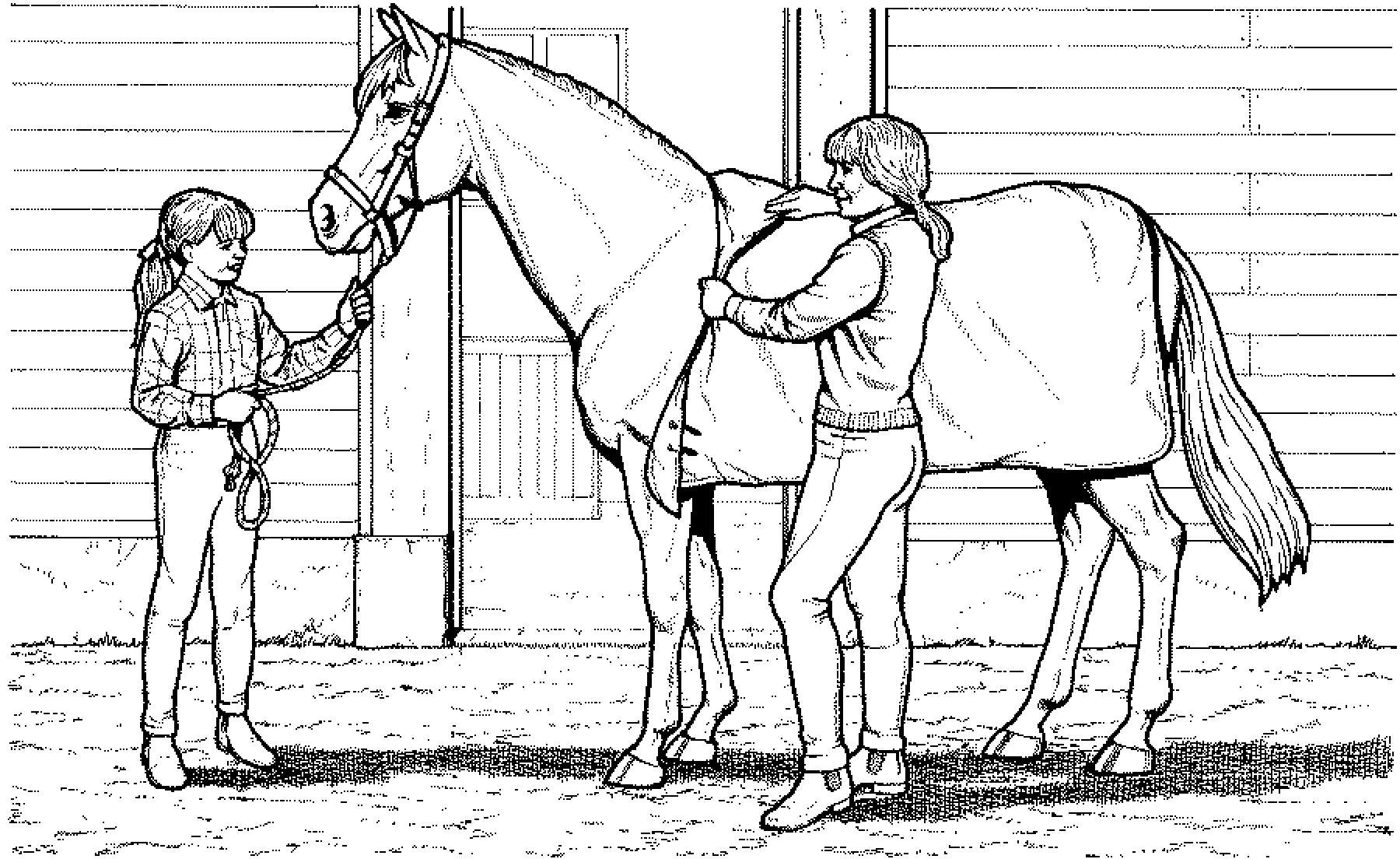 ausmalbilder katzen und pferde  top kostenlos färbung