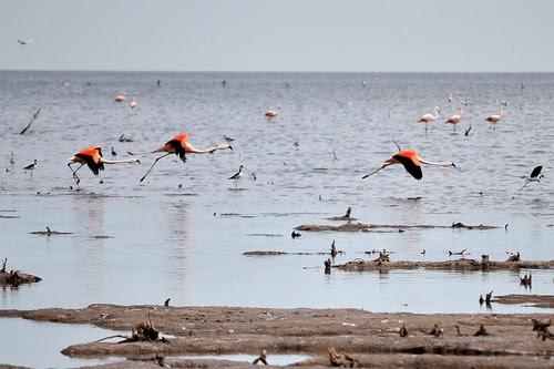 flamingos flying away...