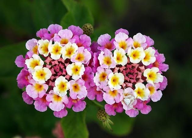 Las 10 Flores Más Hermosas Del Planeta Upsocl