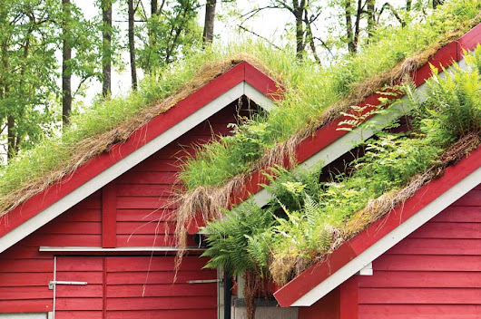 Grow a Living Roof or Green Roof | Sustainable Living - Special Finds