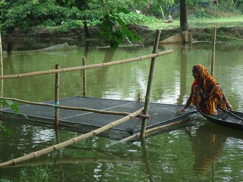 A Woman Checks On Her Tilapia Bangladesh Photo By Worldf