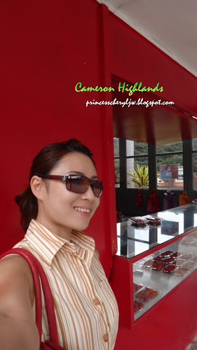 Cameron Highlands 01