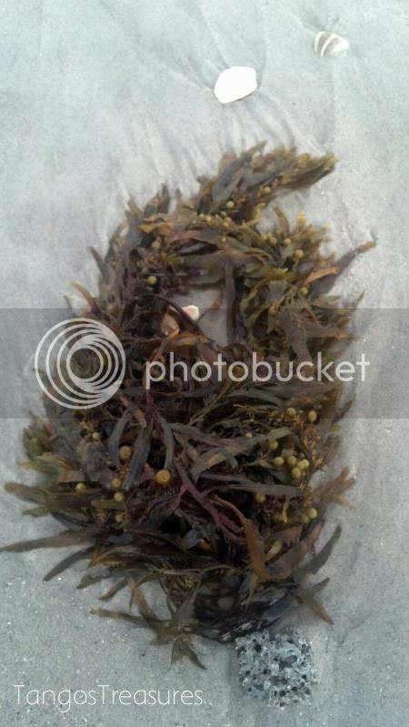 seaweed_zps474b6ce5
