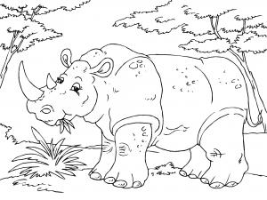 Dibujos De Animales De La Selva Para Colorear Paracolorear Net