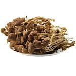 Premium Agrocybe Aegerila Dried Mushroom (8oz.)