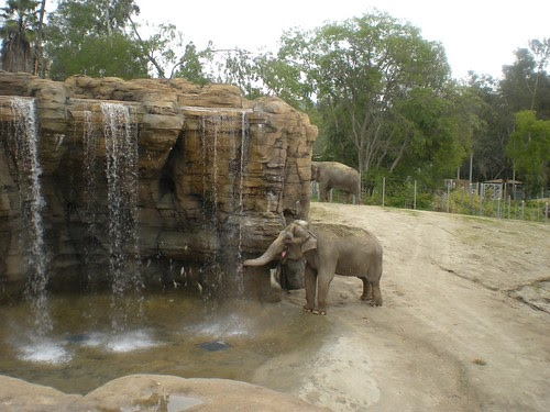 Franklin Avenue First Look At The La Zoo S New Elephants