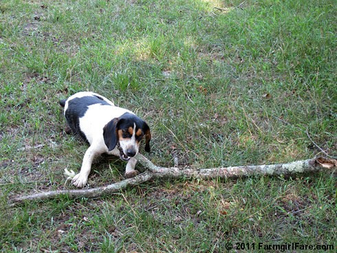 Bert with a big stick 1