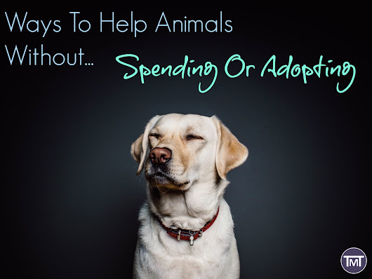 Ways To Help Animals Without Spending or Adopting - The Mummy Toolbox