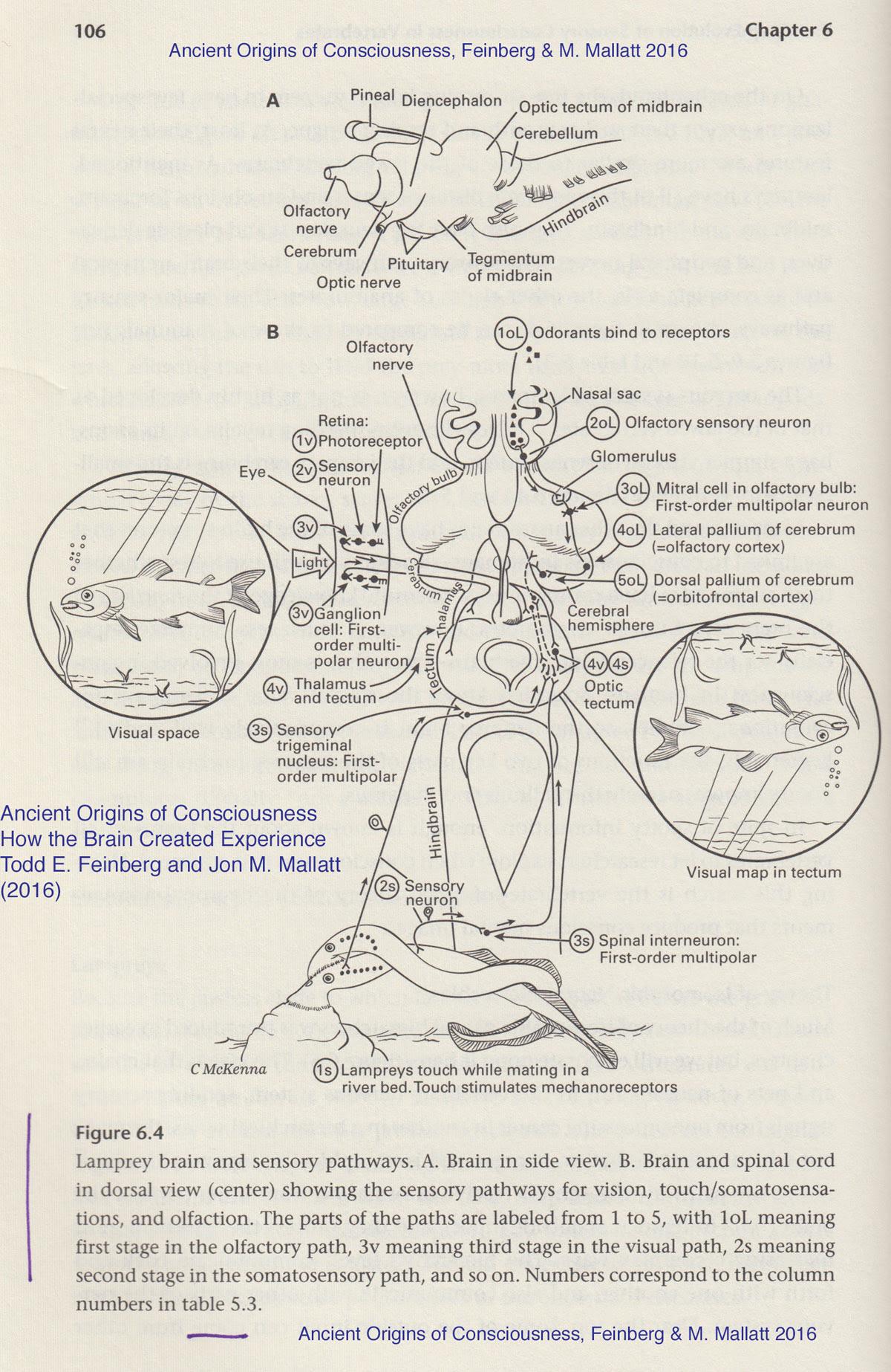 PDF The Ancient Origins Consciousness How The Brain