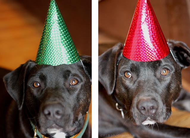 oddball birthday hat collage