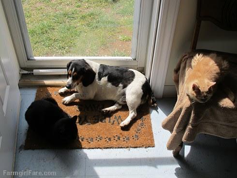 Bert and cats (3) - FarmgirlFare.com