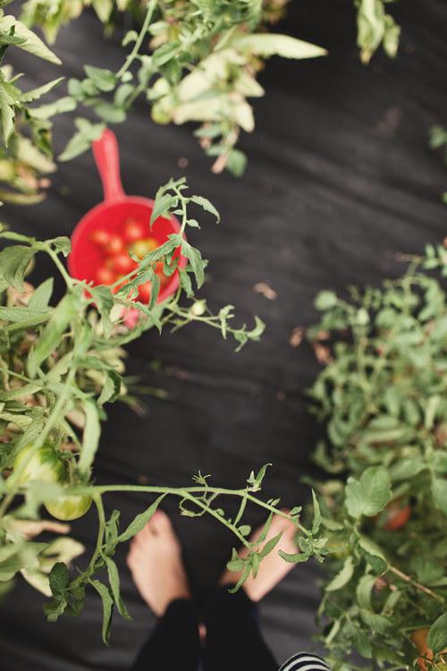 gardenfeet