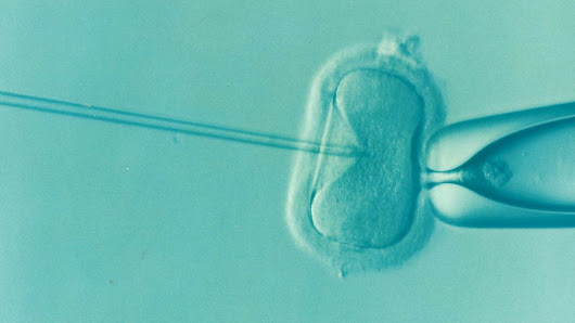 Research could help conception in IVF patients