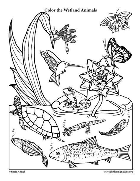images  coloring habitats  animals