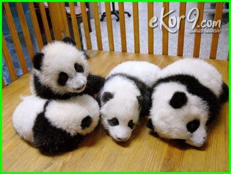 foto bayi hewan  lucu  menggemaskan ekorcom