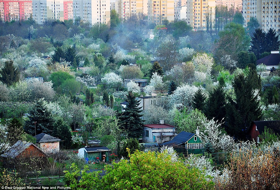 With tower blocks in the background, it looks like an unlikely site for a Beautiful Garden but this shot taken by Ewa Gryguc, in Warsaw, Poland, came in second place in that category
