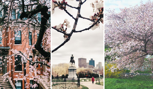 Go See All the Flowering Pink Trees While You Still Can