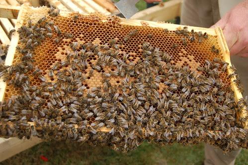 Beekeeping Jul 10 6