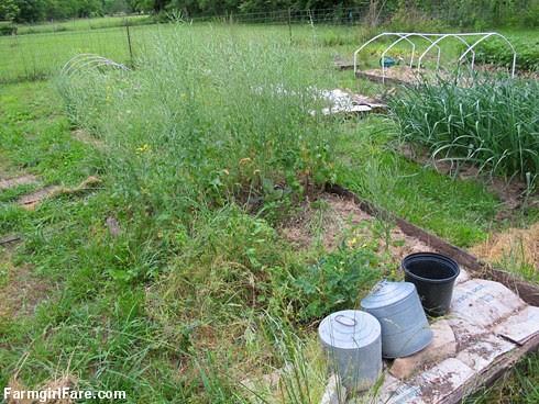 In the kitchen garden on 6-9-13 (10) - FarmgirlFare.com