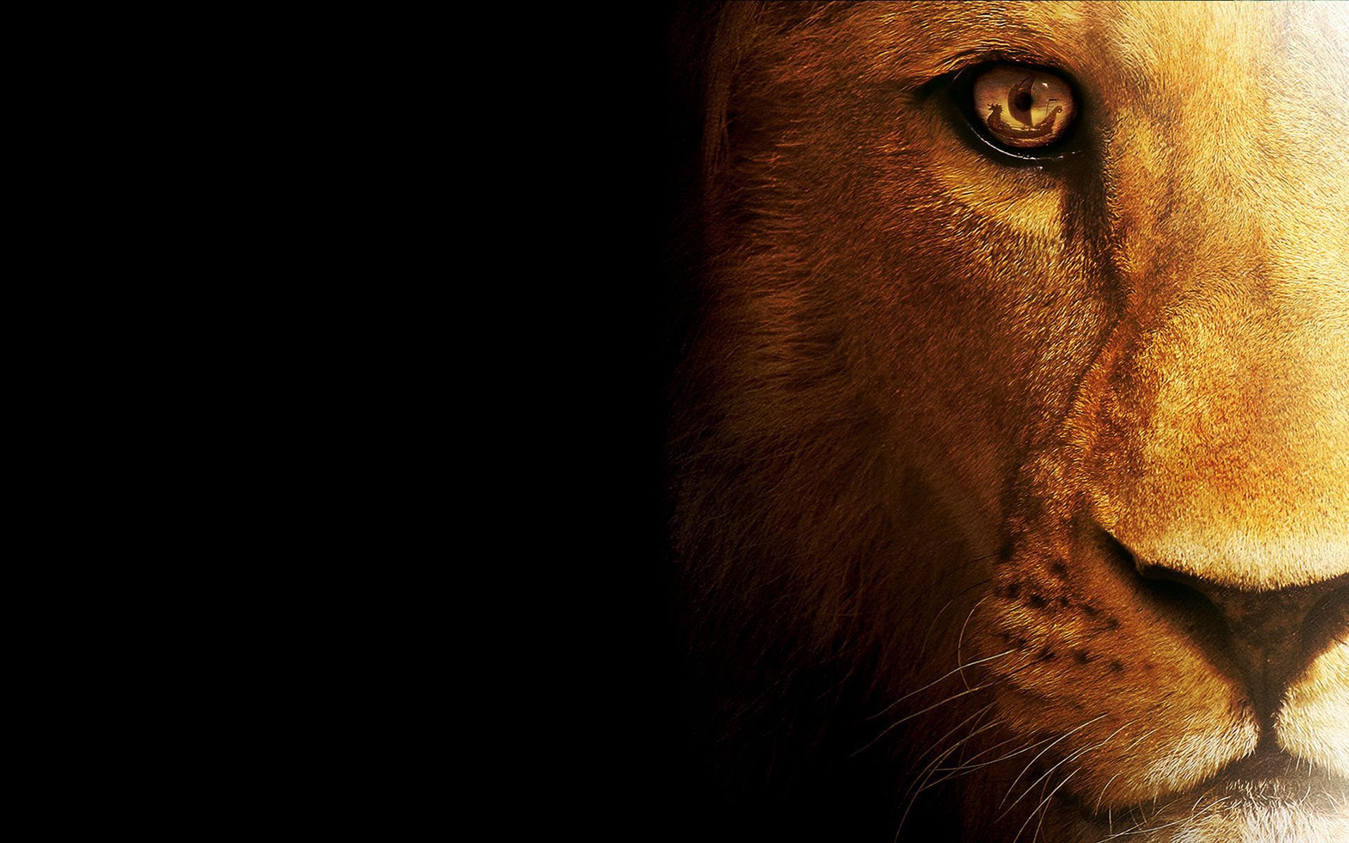 Wallpapers Of Lion 20 Wallpapers Adorable Wallpapers Images, Photos, Reviews