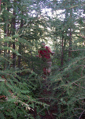 Hey!! Is this the trail? Uh, yeah, right through those trees!!! (literally)