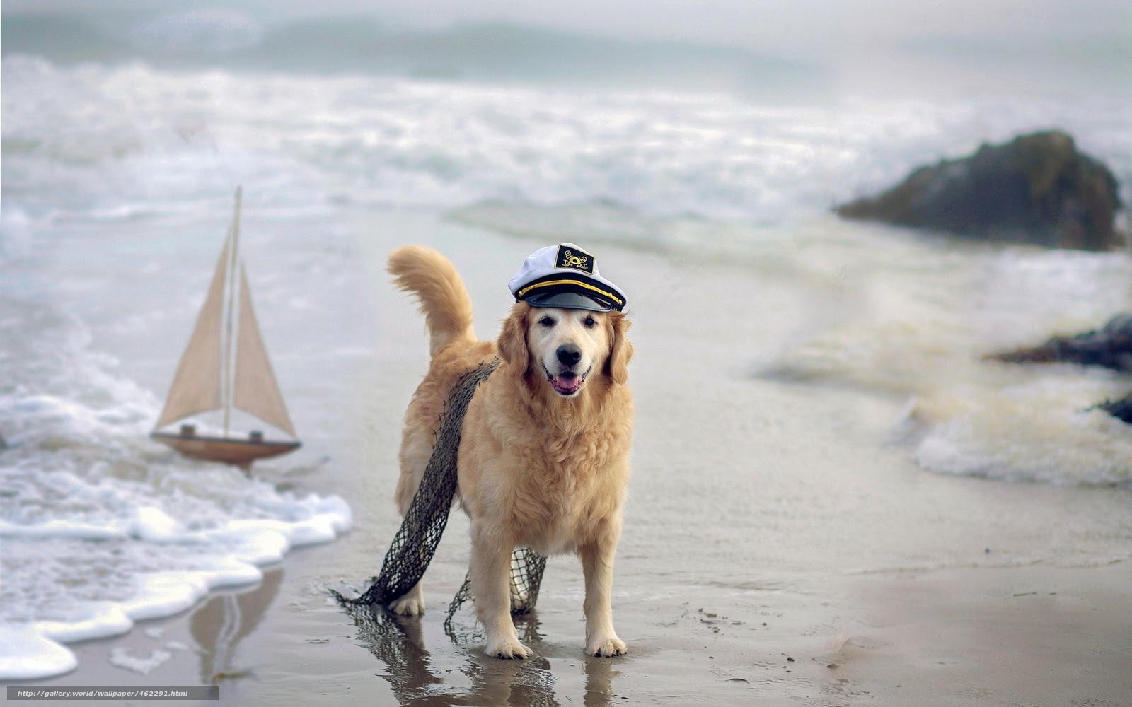 最新 無料 壁紙 犬 ベスト 壁紙 イラスト キャラクター
