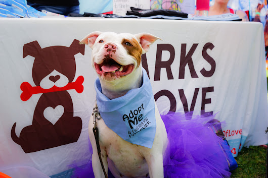 Barks of Love 'Bark Bash' Family Festival | OC Mom Blog