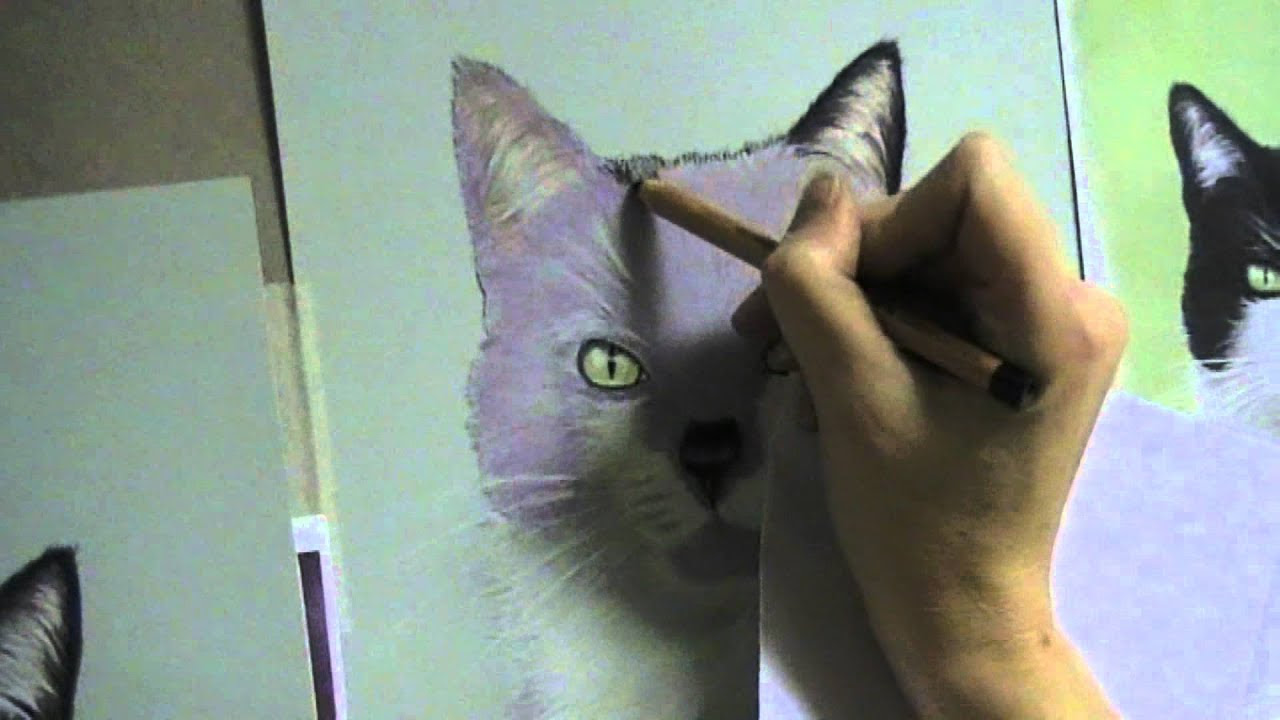How to paint a black and white cat using pastel pencils ...