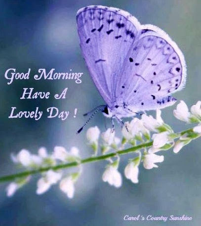 Good Morning Have A Lovely Day Pictures Photos And Images For