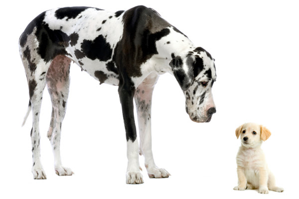 breeds of dogs. dogs breeds that don.